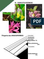 Aula Teorica 10 - Eudicots_introducao_RosideasMalvídeas_2012