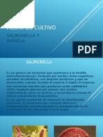 MEDIO DE CULTIVO.pptx