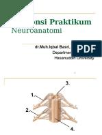 Responsi Neuroanatomi