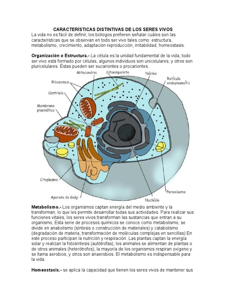 Características Distintivas de Los Seres Vivos..