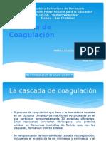 Cascada de Coagulación- Wilfred Perez.pptx