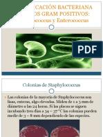 24562668-IDENTIFICACION-COCOS-GRAM-POSITIVOS.pdf