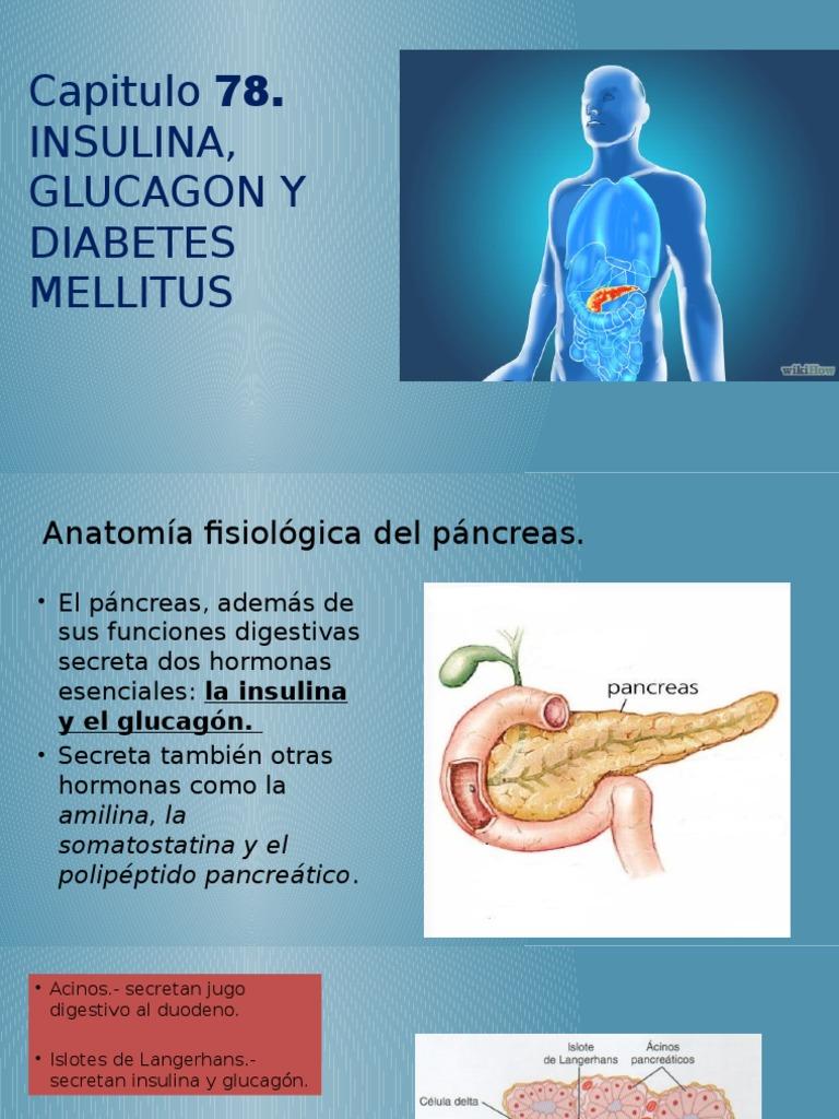 Famoso Diabetes Anatomía Y Fisiología Elaboración - Anatomía de Las ...