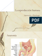 Tema 21. La Reproduccion Humana