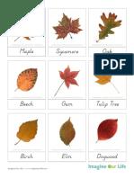 3PartCards-AutumnLeaves2