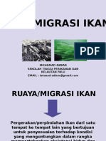 Migrasi-Ikan