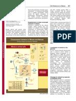 mitosis meiosis.pdf