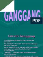 ganggang (1)