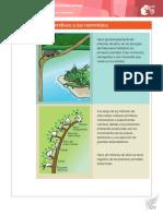 14_De_los_primates.pdf