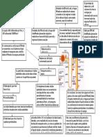 Ultrafiltrado y Reabsorcion proximal