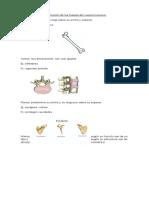 Calsificacion de Los Huesos Del Cuerpo Humano
