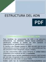 2. Estructura Del Adn