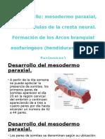 embrio 1 23.pptx