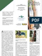 Broca Coqueiro.pdf