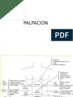 PALPACION (2).pptx