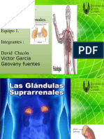 Presentacion Final de Expo de Fisiologia  glandulas  suprarenales