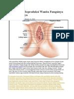 Alat Organ Reproduksi Wanita Fungsinya