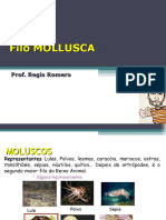 molusco.ppt
