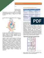 Fisio 2- Sistema Circulatorio- Capsula 1