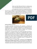 CRIADERO DE CONEJOS.docx