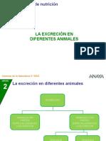 Excreción en ANIMALES