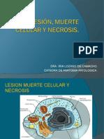 LESION%252c MUERTE CELULAR Y NECROSIS (1).ppt