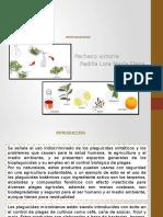 Bioplaguicidas Expo