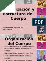 Organizacon y Estructura Del Cuerpo 1203564748351071 2