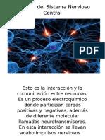 Signasis Del Sistema Nervioso Central