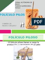 FOLICULO PILOSO