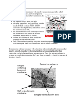 Muscle Notes.pdf