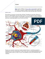 Neurons Notes 1.pdf