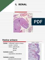 APARAT  RENAL- vezica  urinara+ aparat  genital   masculin.ppt