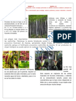 343476301-Plant-As.docx