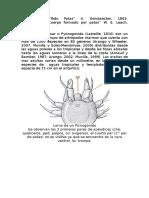 Las Arañas de Mar o Pycnogonida