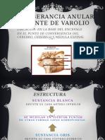 Anatomia de La Protuberancia