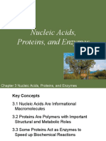 PoL2e Ch03a Lecture-Nucleic Acids Proteins and Enzymes