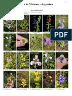 Flora de Misiones1a6