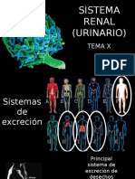 8. Sistema Renal (Urinario)