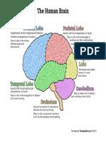 The Human Brain Diagram 2