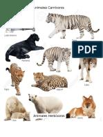 Animales carnivoros + herbivoros