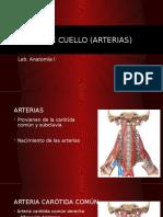 Vasos de Cuello (Arterias y Venas)
