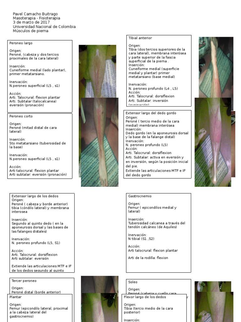 Músculos de Pierna