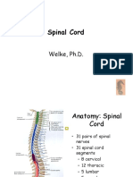 Welke.spinal Cord.111