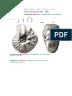 Fósiles de Las Formaciones Carbonatadas de Cajamarca - MOSTACERO HERNÁNDEZ JOSVEL ABRAHAM