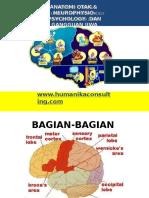 AnaTomi Neurotransmitter