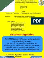 Sistema DigestivoTODOS
