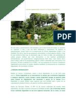 Reforestación Versus Regeneración Natural en Tierras Degradadas