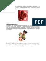 Periodo Prenatal