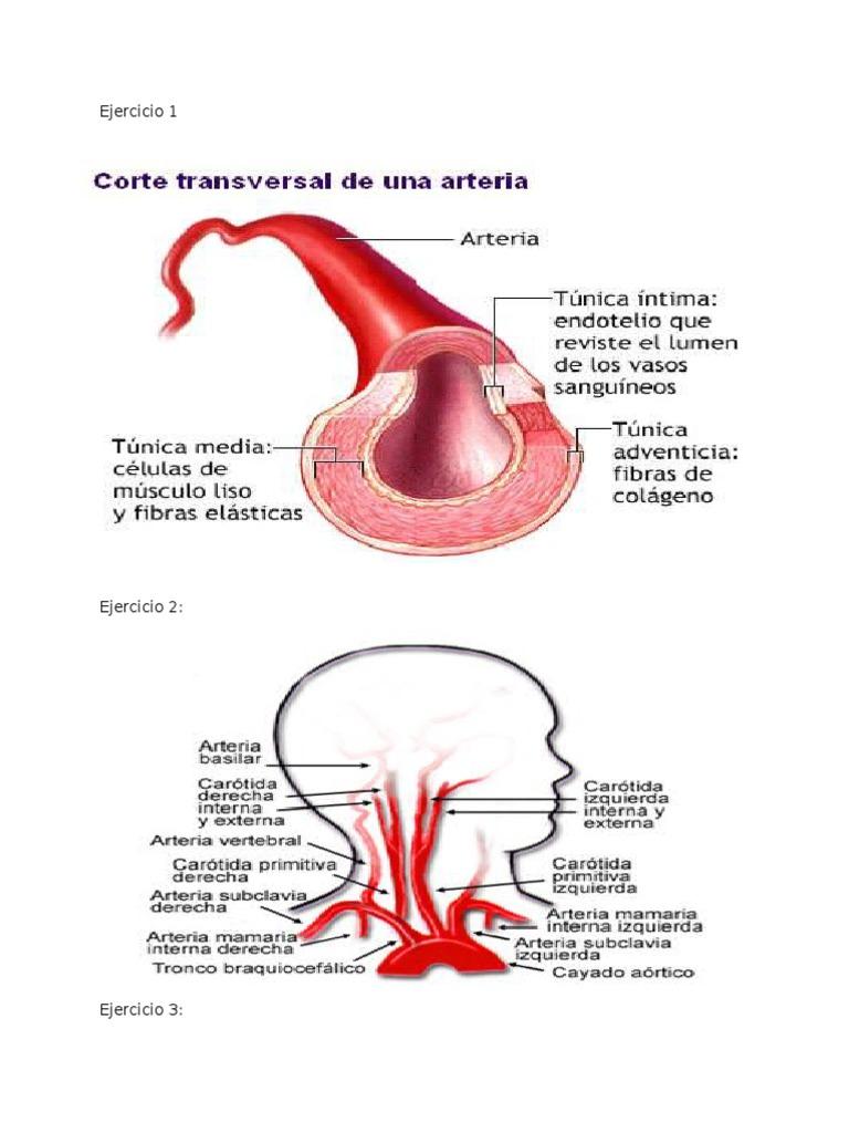 Asombroso Anatomía De La Salida Torácica Ideas - Anatomía de Las ...